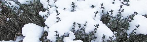 Kräuter sicher durch den Winter bringen