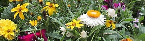 Garten für eine ökologische Saison fit machen